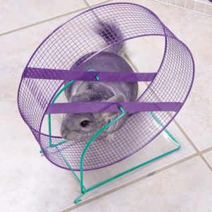 Dangerous Wire Chinchilla Wheel