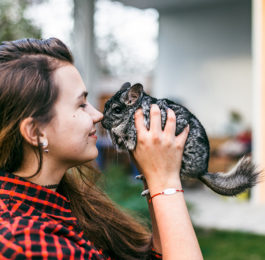 Everything You Need for a Pet Chinchilla - New Owner Checklist