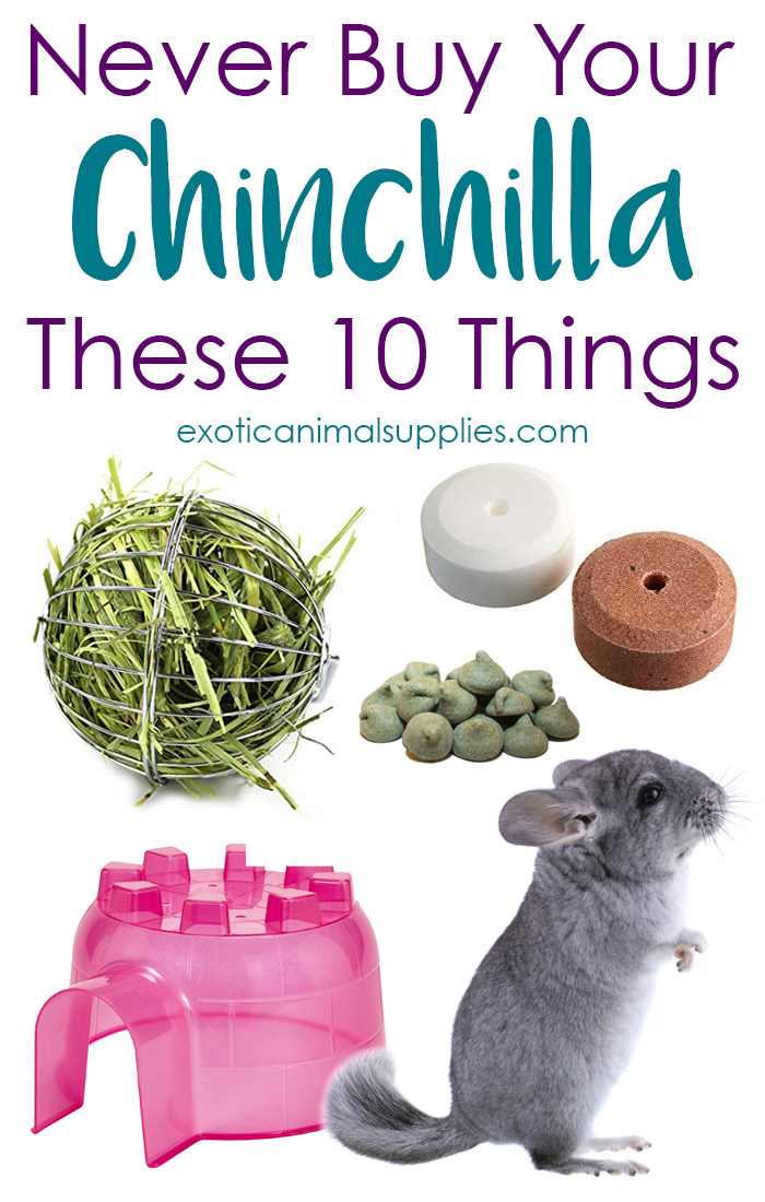 10 Things You Should Never Buy Your Pet Chinchilla