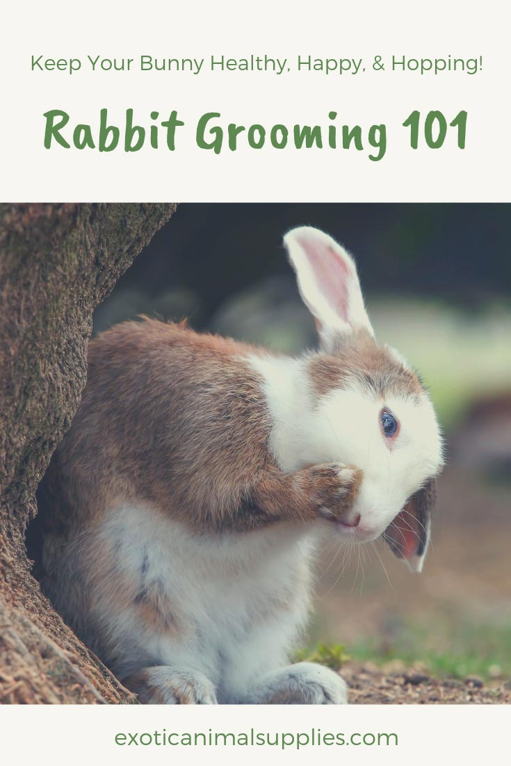 Pet Rabbit Grooming 101 - How Clean & Care for Your Bunny