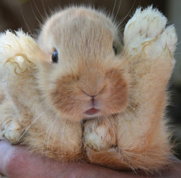 Check Rabbit Feet for Hock Sores