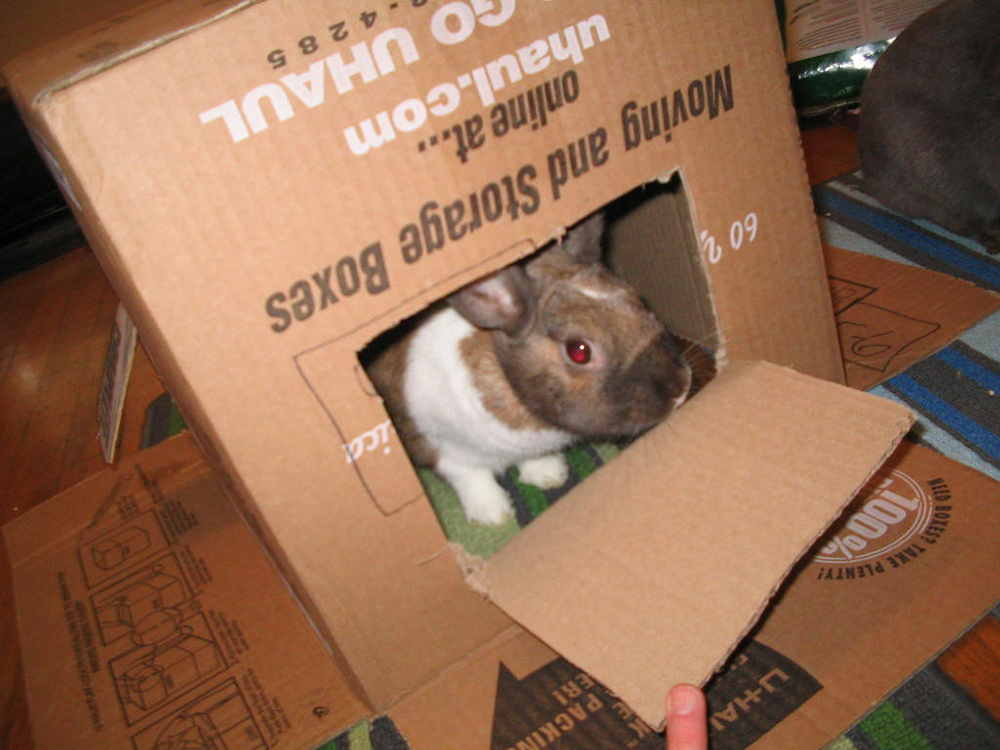 DIY Rabbit Cardboard House