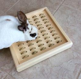 Pet Rabbit Toys & Bunny Chews