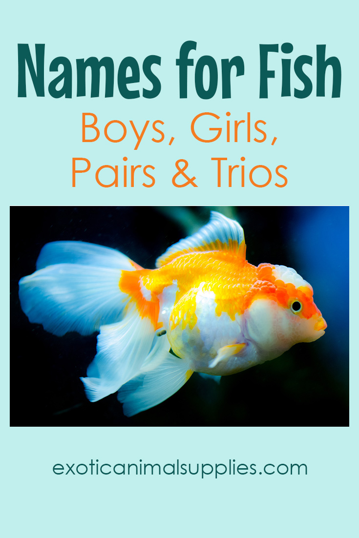 300+ Names for Fish - Funny & Unique Names for Boys & Girls - Exotic