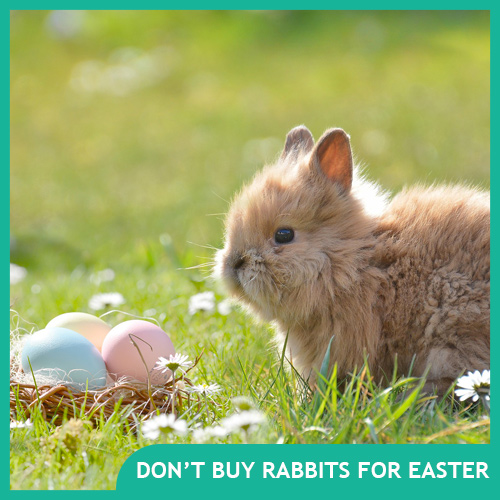 Why Pet Rabbits Make Terrible Easter Gifts