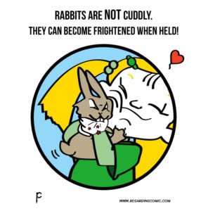Rabbits Don't Like to Cuddle