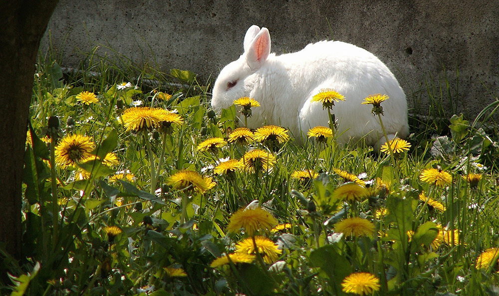 Plant a Bunny Garden: Food You Can Grow for your Pet Rabbit