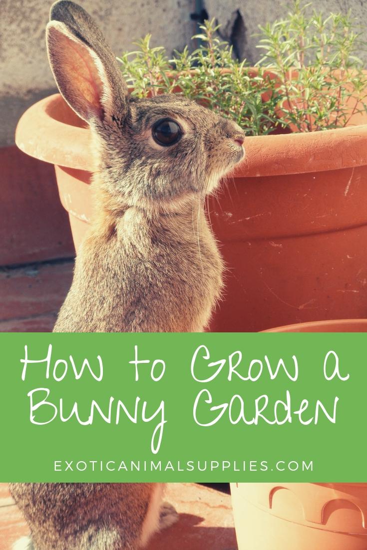How to Grow a Bunny Garden - Fresh Fruits & Veggies for Rabbits
