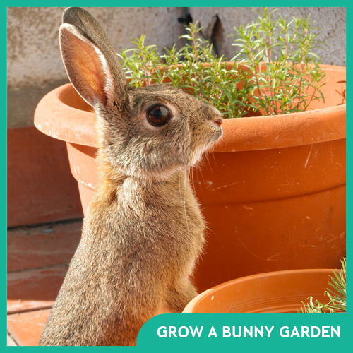 How to Grow a Bunny Garden