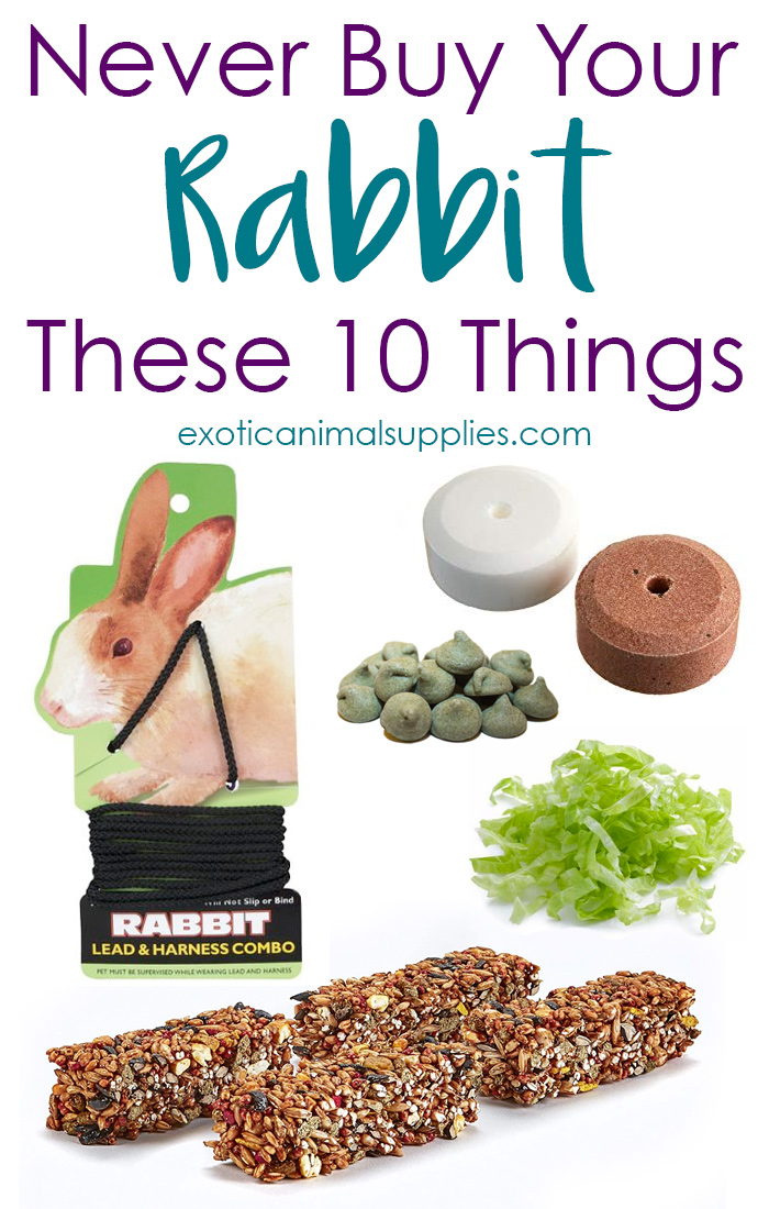 10 Things You Should Never Buy Your Pet Rabbit