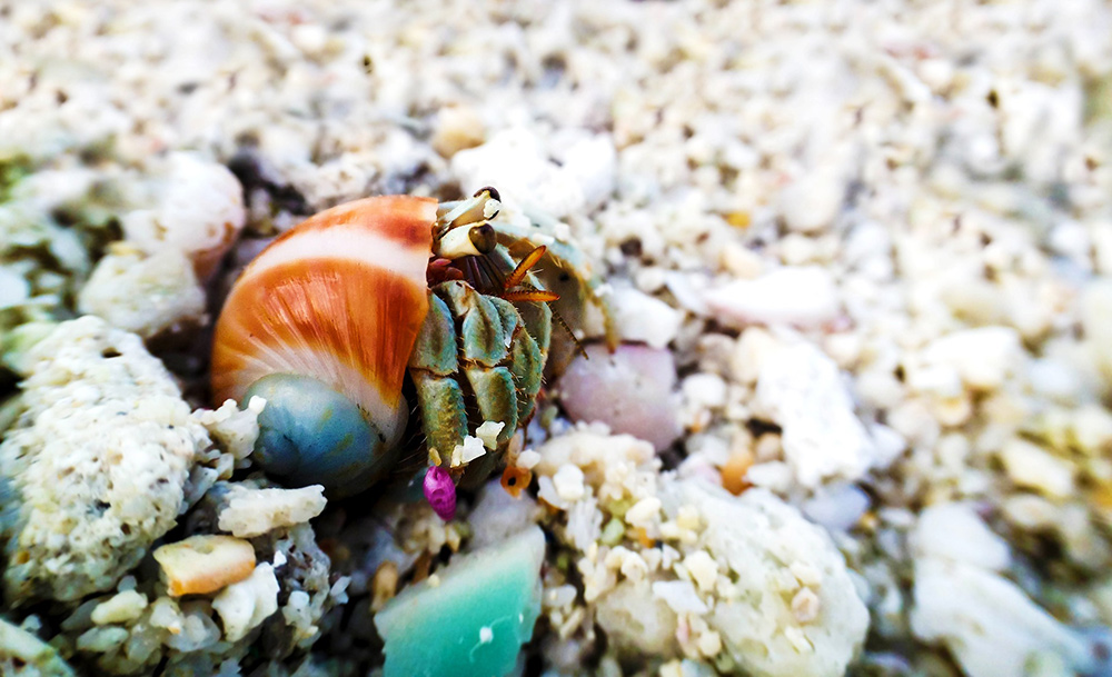 Funny Names for Hermit Crabs