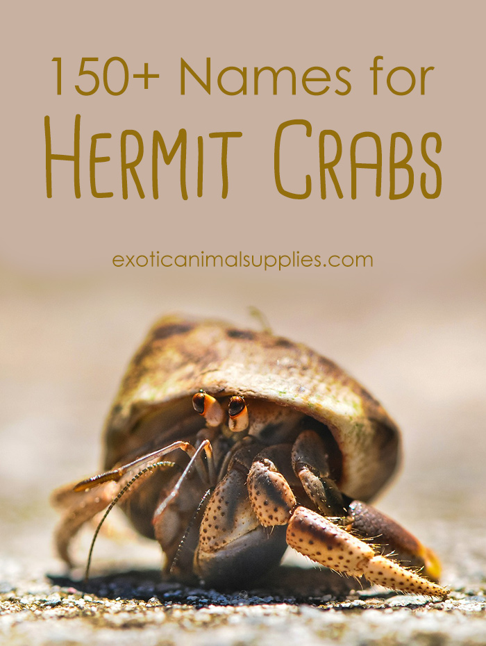 150+ Names for Hermit Crabs - Male & Female