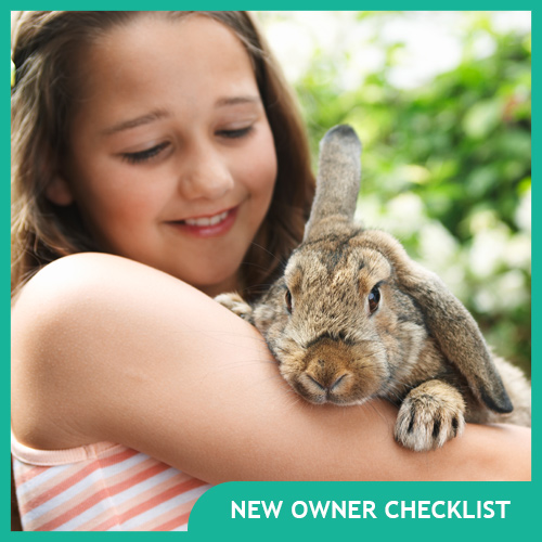 Everything You Need for a Pet Rabbit – New Owner Checklist