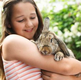 Everything You Need for a Pet Rabbit - New Owner Checklist