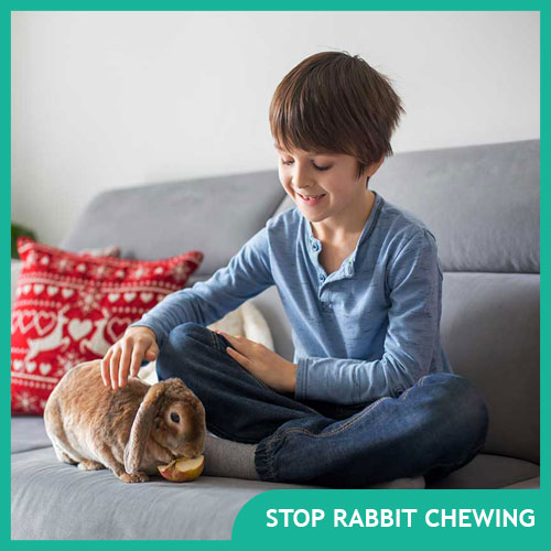 How to Stop Pet Rabbits From Chewing